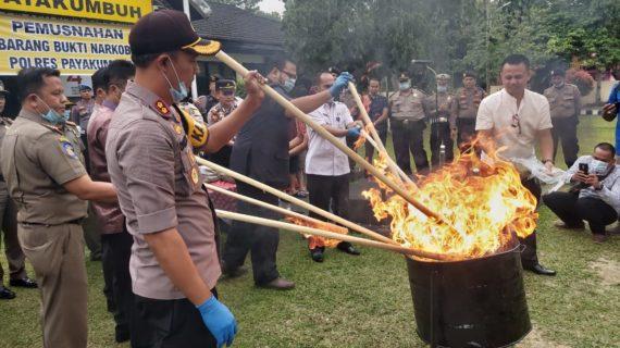 Polres Kota Payakumbuh Musnahkan 7,5 Kilogram Ganja Kering